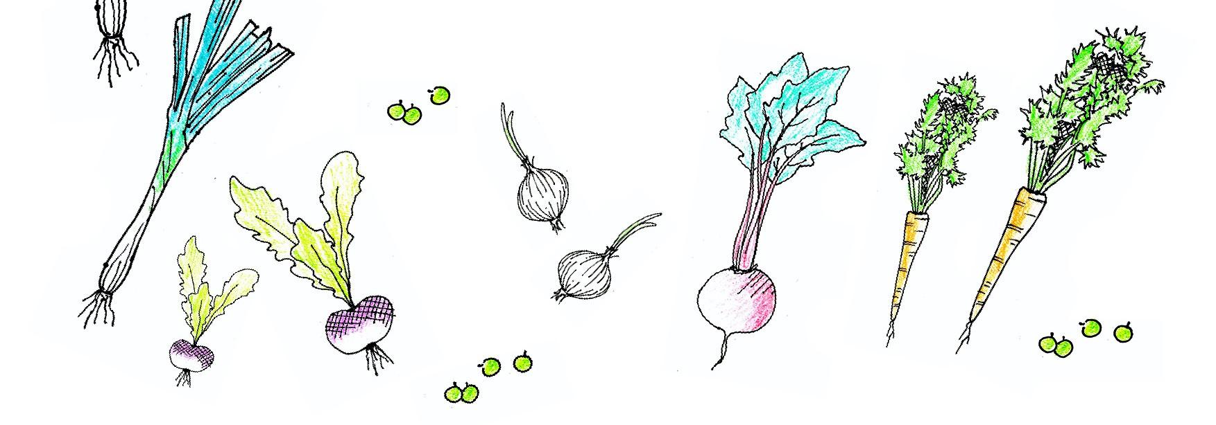 dessins_legumes_c_Anais_Lohmann_-_ecomusee_des_monts_d_arree.jpg